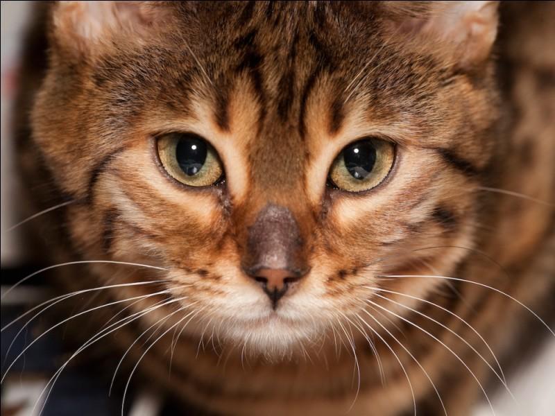 À quoi les moustaches d'un chat lui servent-elles ?