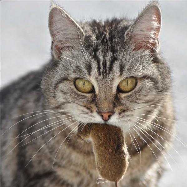 Si on ne donne pas de viande à un chat, que va-t-il se passer ?