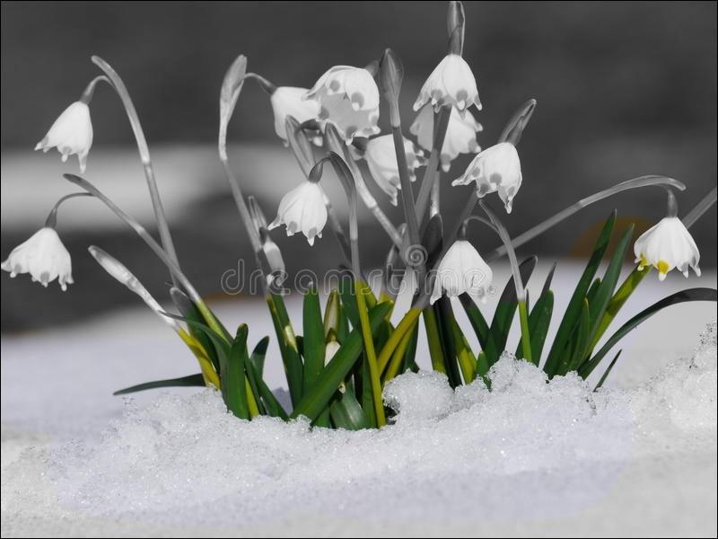 Donnez de la couleur à ces fleurs de printemps ?