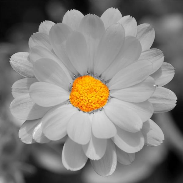 Et enfin rendez sa couleur à cette fleur dont vous connaissez tous le nom, et qui ne vous en aura pas causé, je l'espère, pour répondre à ce quiz !