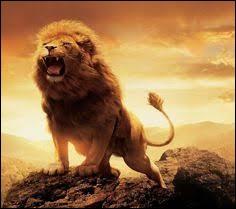 Lorsqu'un lion rugit, jusqu'à quelle distance l'entend-on ?