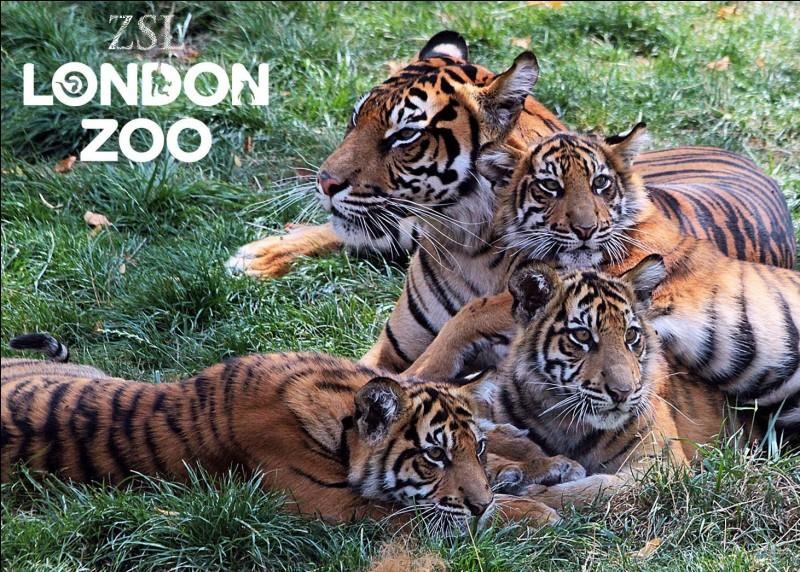 Combien d'espèces retrouve-t-on dans le zoo de Londres ?