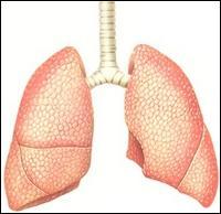 On peut vivre sans poumons.