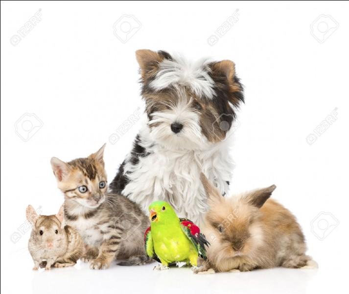 Ton animal domestique préféré :