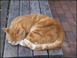 « Il ne faut pas réveiller le chat qui dort » signifie qu'il faut quitter les lieux discrètement.