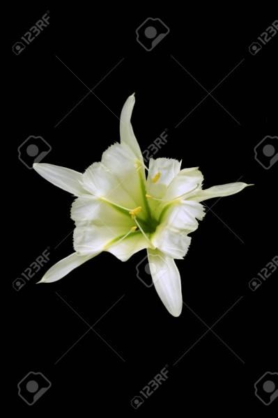 """Pour André Pieyre de Mandiargues, cette """"fleur"""" est de..."""