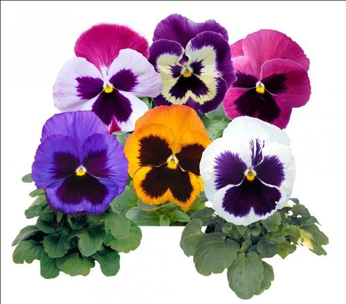 """Ces """"fleurs"""" vont font penser à..."""