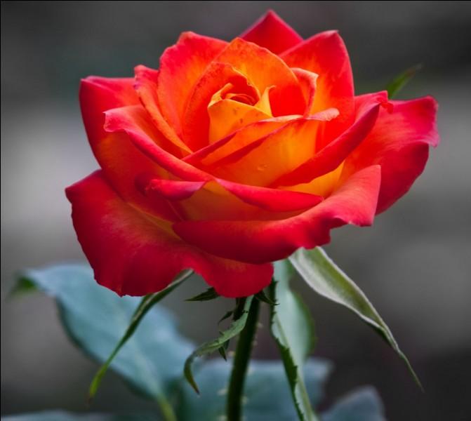 """Pour Marcel Brion, comment est cette """"fleur"""" ?"""