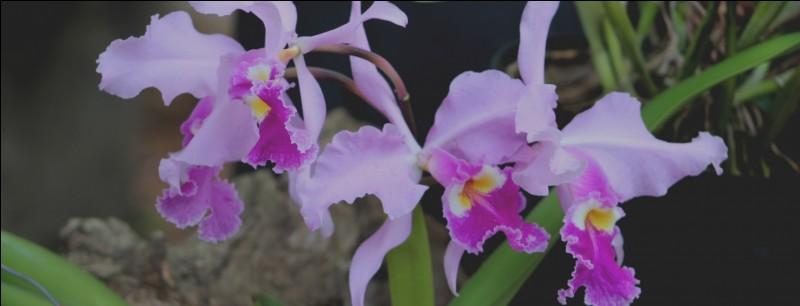 """Pour James Hadley Chase, pour qui ne sont pas ces """"fleurs"""" ?"""