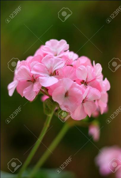 """Pour Georges Fourest, comment est cette """"fleur"""" ?"""