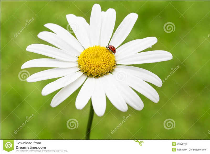 """Cette """"fleur"""" vous fait penser à quel auteur ?"""