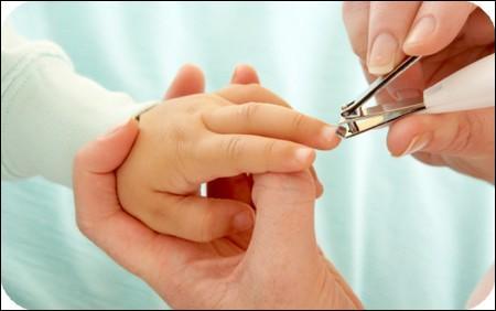 Les ongles comportent des nerfs.