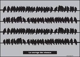 """Pour finir, nous écoutons """"Le courage des oiseaux"""", qui a composé et interprété cette chanson ?"""