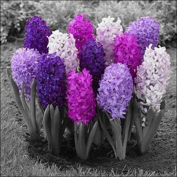 Parmi les premières fleurs du printemps, que sont-elles ?