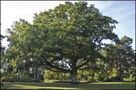 Quel est le fruit du chêne ?