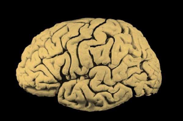 On peut vivre sans cerveau.