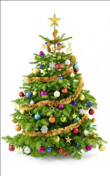 Dans la forêt, les sapins n'ont pas de guirlandes. [...] est bien décoré pour Noël.