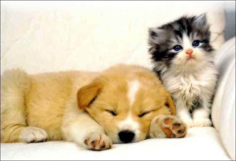 Le chaton est réveillé. [...] au petit chien, il dort bien.