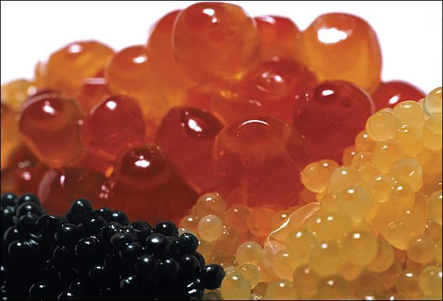 Le caviar est une espèce de poisson.