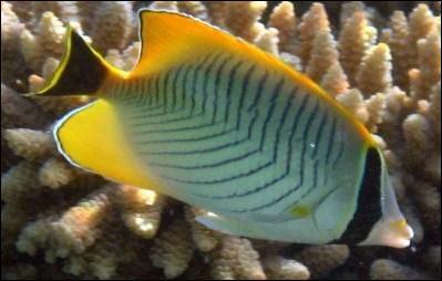 Les poissons possèdent le sens de l'odorat.