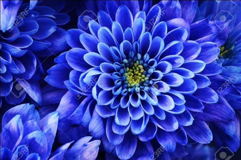 Si je suis un peu fleur bleue, je suis :