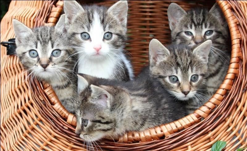 Combien sont morts, quand ils étaient chatons ?