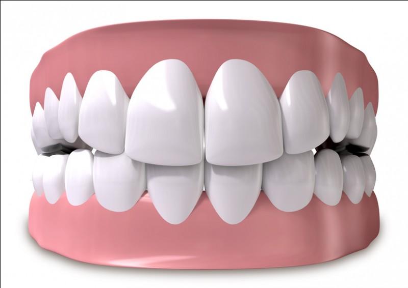 Le nombre de molaires dans la dentition humaine par rapport à celui d'incisives...