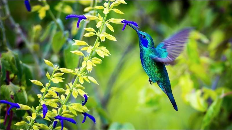 Aimes-tu la nature ?