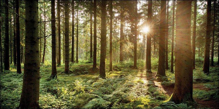 Quelle forêt peut-on associer à Robin des Bois?