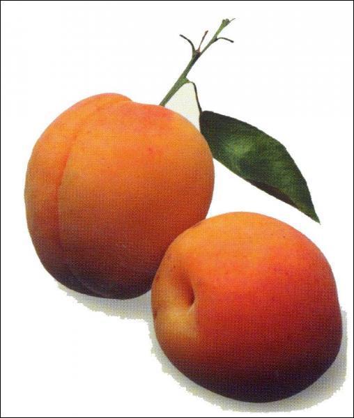 Comment dit-on 'des abricots' en anglais ?