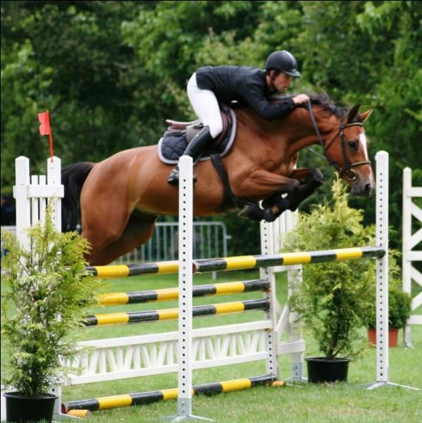 En équitation, il n'y a que le cheval qui travaille :