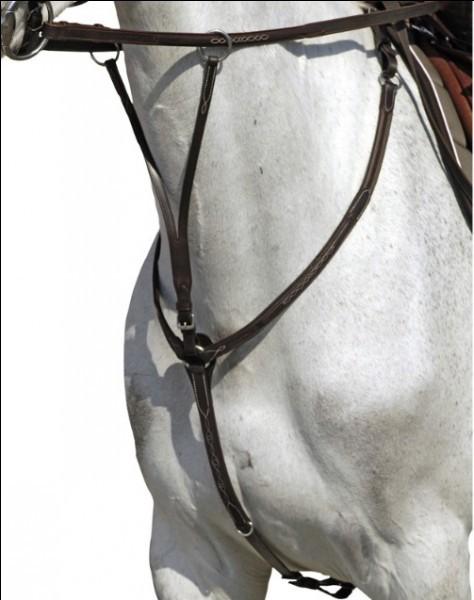 L'équitation - L'équipement