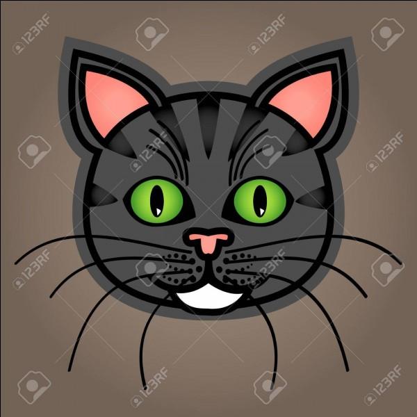 """Comment traduit-on """"chat"""" en italien ?"""