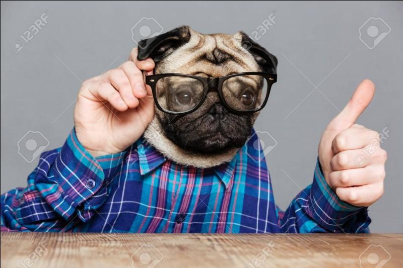 "En italien, ""chien"" se dit..."