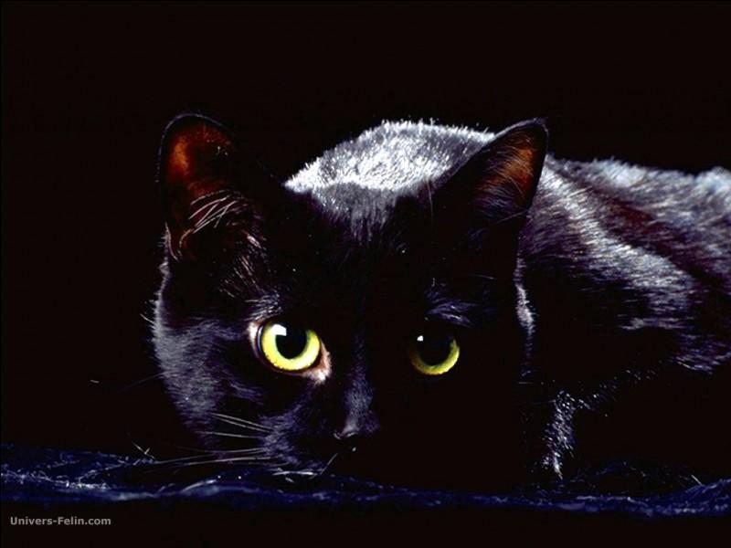 Les chats peuvent voir ...