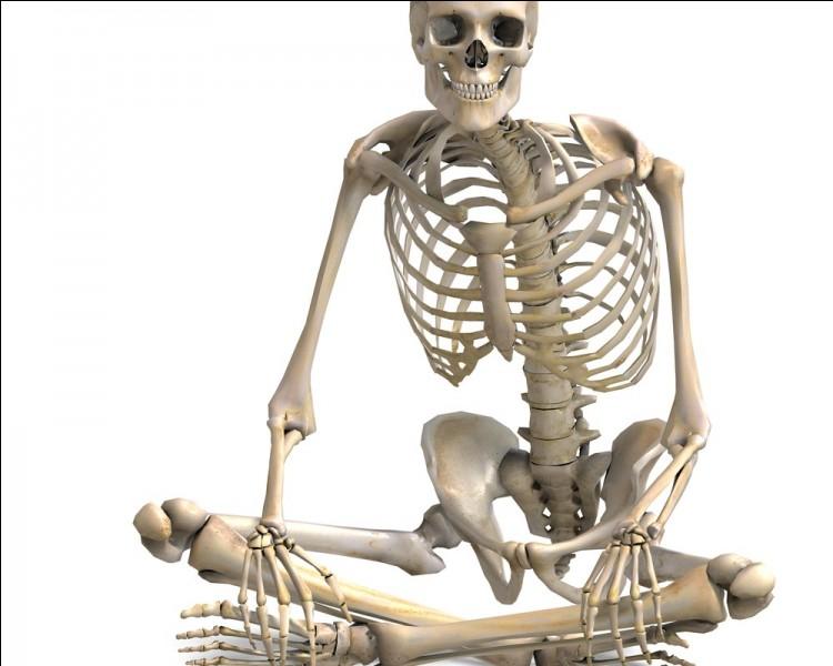 À l'âge adulte, combien d'os comporte le corps humain ?