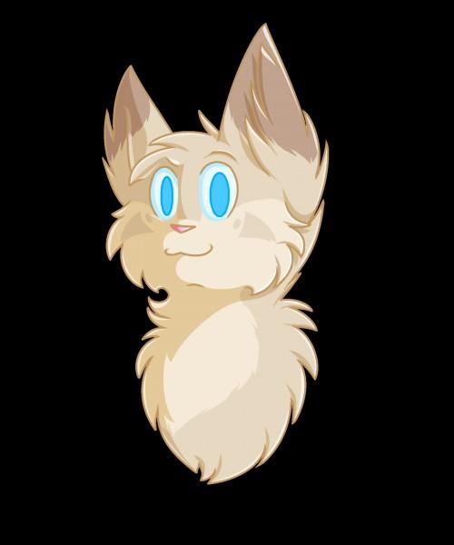 Quel est le nom anglais de Truffe de Sureau ?