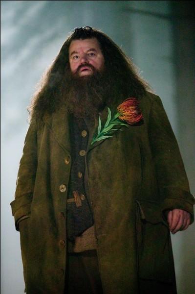 Hagrid est plus jeune que Voldemort :