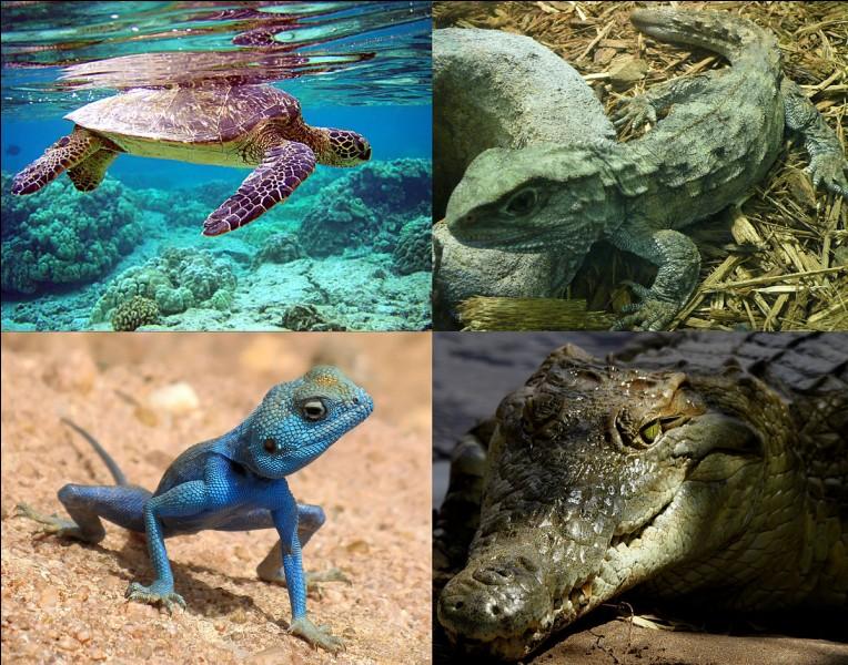 Quel reptile donne le nom à une de ses romans ?