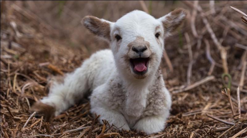 Au début du premier épisode, Tokyo et le Professeur font référence à «l'agneau». Qui est l'agneau ?