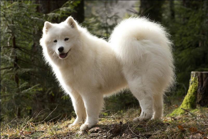 Les toutous de tout poil sont à l'honneur le 26 août : c'est la Journée mondiale du chien.En photo, lequel vous sourit ?