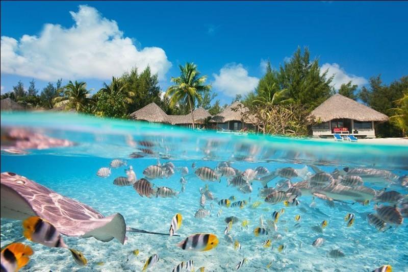 Située dans l'archipel de la Société en Polynésie française, cette île paradisiaque offre des lagons aux dégradés de bleus, de l'hébergement en petites cabanes sur pilotis entouré de reliefs verdoyants. Vous pouvez y nager au sein d'une faune marine colorée, vivre à 200km/h !