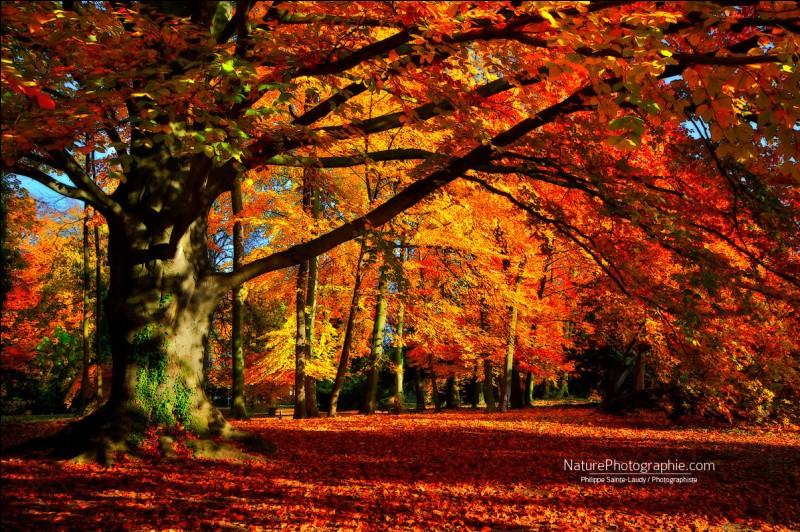 En littérature, dans un sens figuré, que désigne l'automne ?