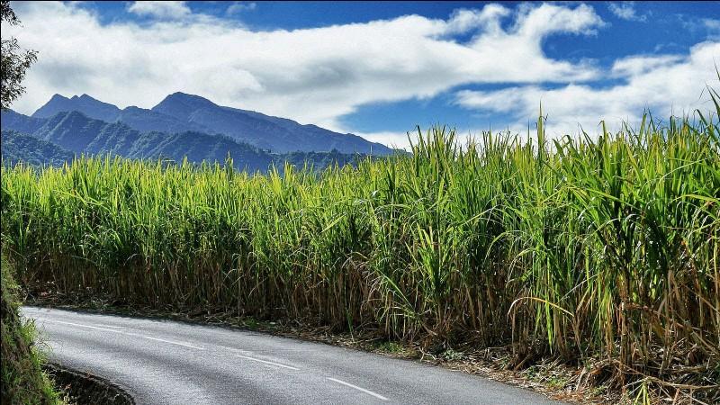 Quel DROM est le premier producteur européen de sucre de canne ?