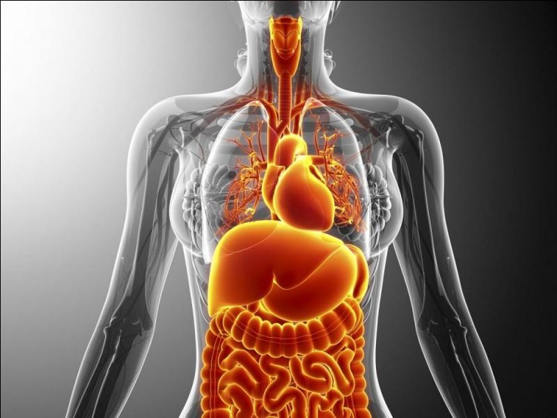 Quel organe du corps humain fonctionne au rythme des diastoles et des systoles ?