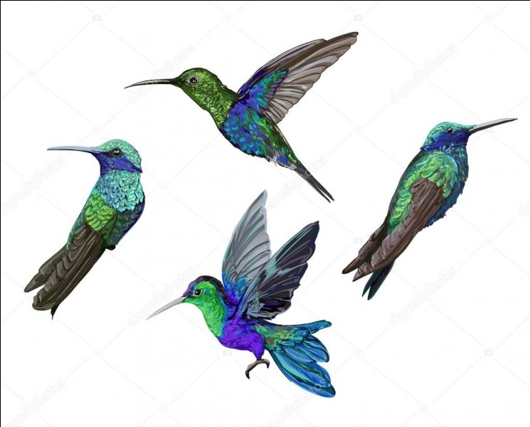 Battement d'ailes font les colibris en moyenne?