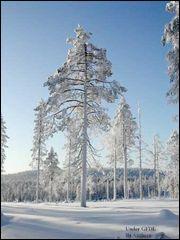 Il est admis que le Père Noël réside en Laponie, mais où ?
