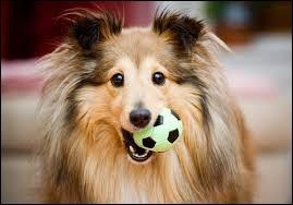 """Langue étrangère - Comment dit-on le mot """"chien"""" en espagnol ?"""