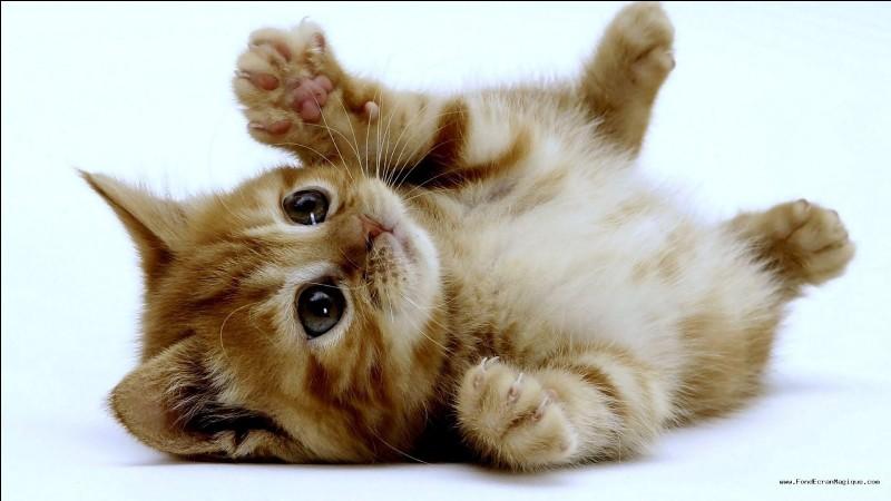 Commençons par une question facile. Les chats sont :