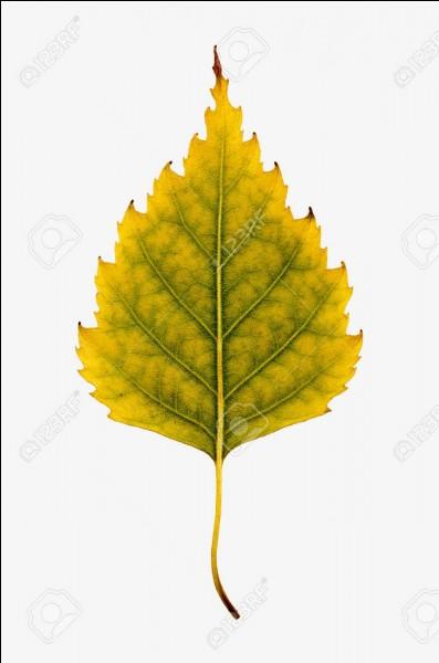 En botanique, le limbe et le pétiole concernent une feuille